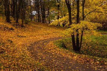 Russian autumn landscape. Paths in the Oranienbaum Park. Saint-Petersburg. Autumn 2016.