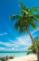 Wall Mural - Palm tree on the beach, Phi-Phi Island, Thailand