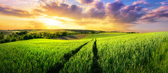 Photo sur Plexiglas Sauvage Vast green field at gorgeous sunset, a colorful panoramic landscape