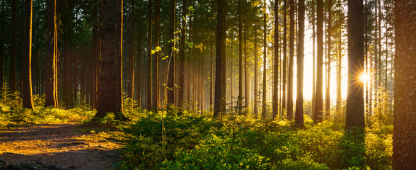 Silent Forest in spring with beautiful bright sun rays Fototapete