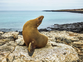 Seal on rocky shore against sky