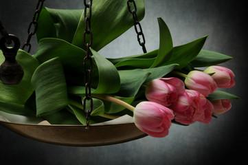 Aluminium Prints Tulip Tulipa Lale Tulip Tulipano Тюльпан チューリップ Tulipani 郁金香 Tulppaanit Tulipan Tulipán Tulpansläktet Lalea צבעוני Tulp توليب Tulpen ट्यूलिप 튤립 Վարդակակաչ Tulpes Лала