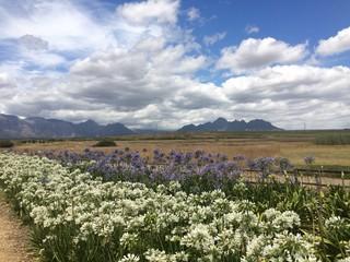 Stellenbosch- Cape Town