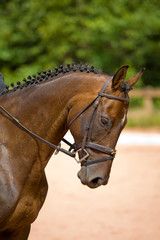 Elegant Horse Head in English tack