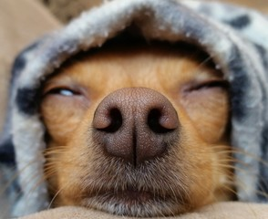 cold cute pet dog Ozzy