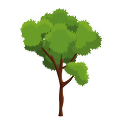 tree plant natural ecology forest vector illustration eps 10