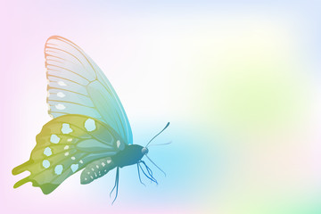 Butterfly on colorful gradient tone background