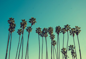 Photo sur Plexiglas Palmier California high palms on the blue sky background