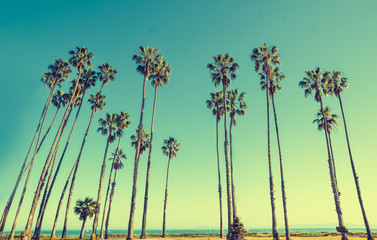 California hight palms on the blue sky background
