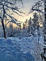 snow sweden trees cold by wirehn