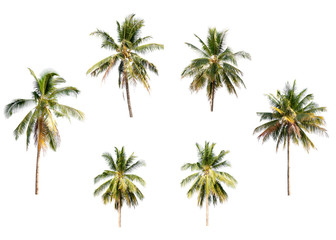 Different coconut palm trees on white isolation