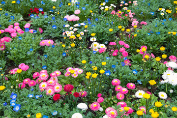 Colorful flowers green park at Tokyo Japan on March 31, 2017 | Beautiful nature background