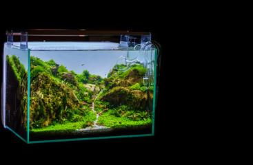 variety of aquatic plants tank.