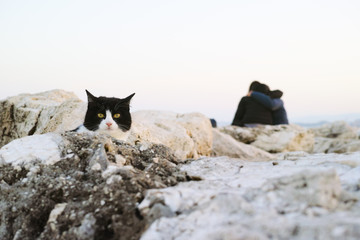 The cat between the cliff