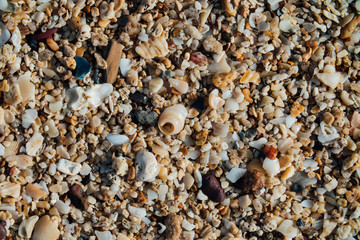 Sand on the beach with small seashells. Background texture, macro.