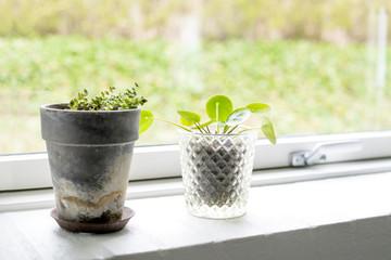 Plants in pots in a bright window