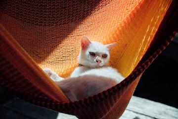White cat rest is basking in an orange hammock.