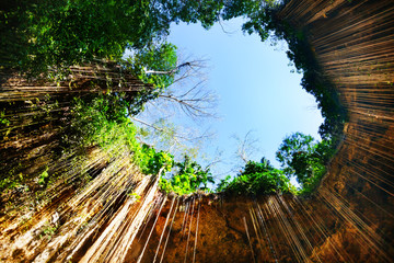 Bottom view of Ik-Kil cenote with hanging roots