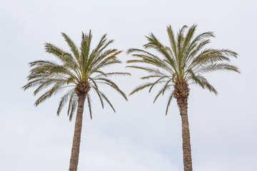 Two palm trees against the sky