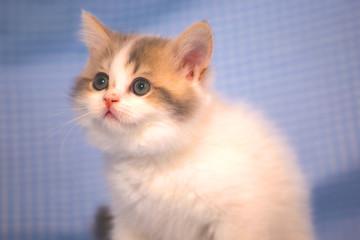 Funny kittens. Cute little cat.