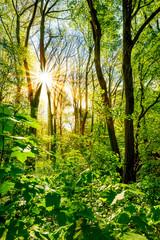 Fototapete - Wald im Frühling bei strahlendem Sonnenschein