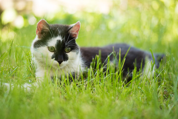 Cute  cat playing on the grass