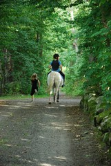 Riding in the wood