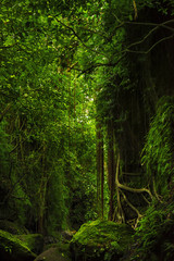 Fantastic tropical mossy forest with amazing tropical plants, vines and stone in the moss. Nature landscape mysterious background. Bali, Indonesia.