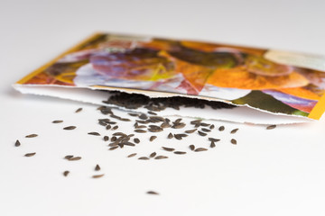 Heirloom lettuce seeds spilled from a seed packet