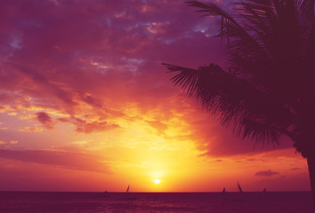Wall Mural - Silhouette palm tree sailboats sunset faded filter