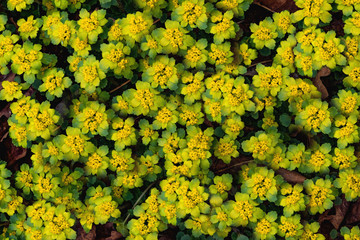 Many spring wildflowers. Background of yellow flowers