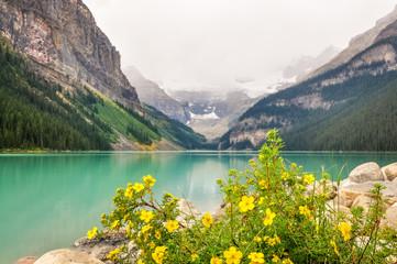Yellow flowers on the side of Lake Louise, one of the most beautiful alpine lakes in the Canadian Rockies, famous for the green-blue color of the water.