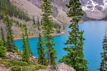 Peeking through conifer trees to Lake Moraine beautiful water color.