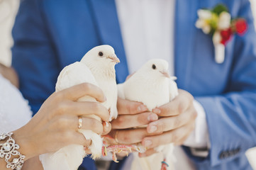 Two snow white doves in the hands of the newlyweds 7855.