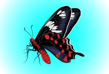 Butterfly Vector Illustration on blue