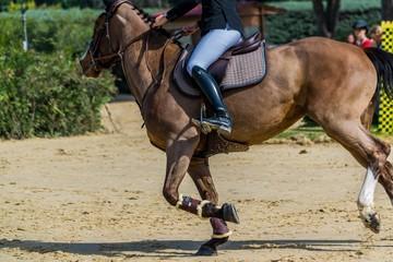 Equitation, saut d'obstacles.