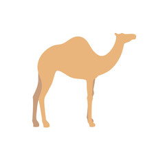 Camel vector sign illustration