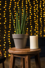 Succulent and candle in loft interior. Bokeh