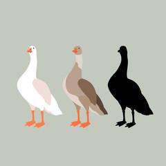 goose vector illustration style Flat set silhouette