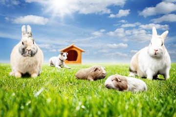 Haustiere auf der Wiese
