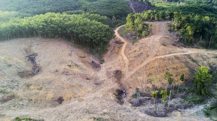 Deforestation. Logging, Rainforest felled to make way for oil palm plantations