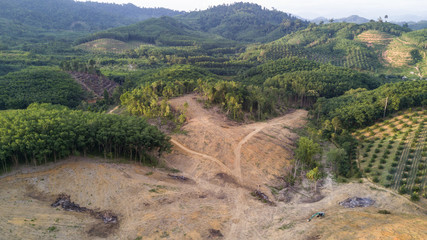 Deforestation. Logging, Rainforest felled to make way for oil palm plantations