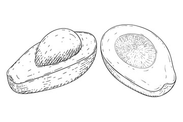 Avocado. Hand drawn sketch