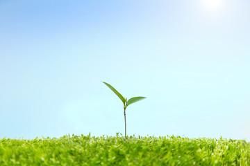 苔に生える双葉の成長と環境イメージ