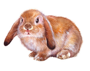 Watercolor single rabbit animal isolated on a white background illustration.