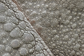 Rhinoceros, his skin approximately