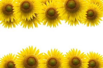 Sunflower frame on blue sky background.