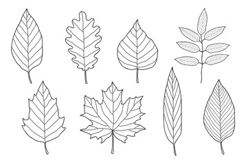 set of hand drawn leaves
