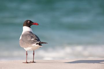 Seagull on a sandy beach as waves crash the shore.