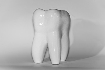 Image of human molar tooth on white background for texture and logo